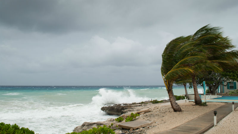 Caribbean strom blows trees