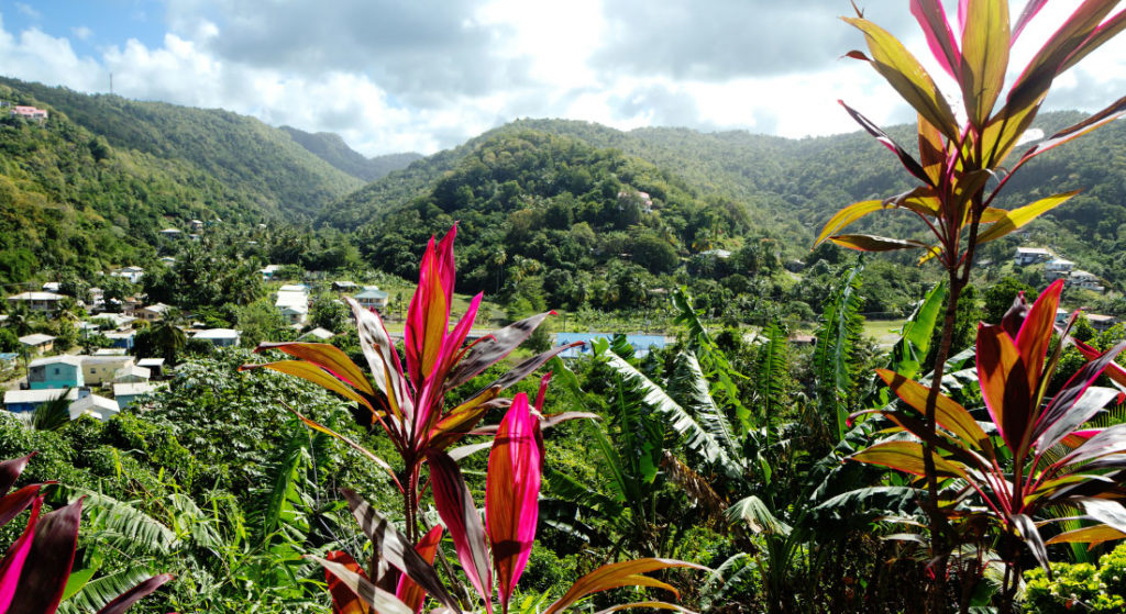 St Lucia mountains seen through flowers