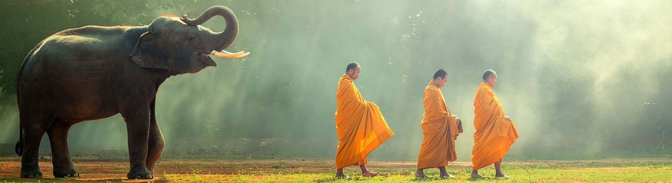 Thailand elephant with monks