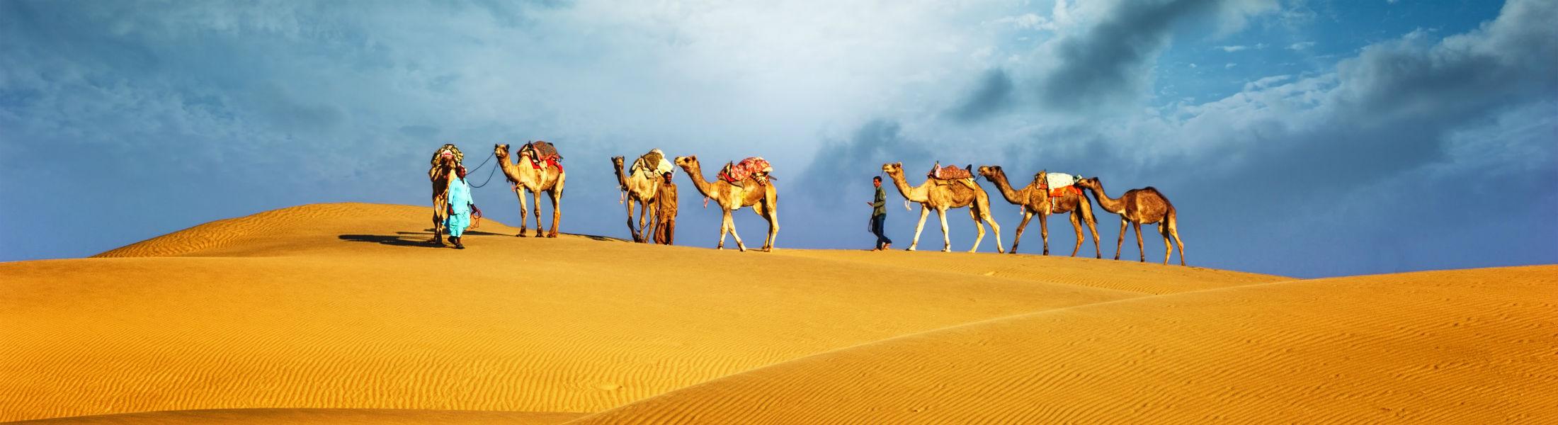 Dubai - Camels in desert