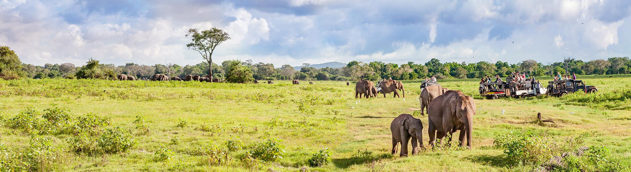 Elephants on Safari in Africa