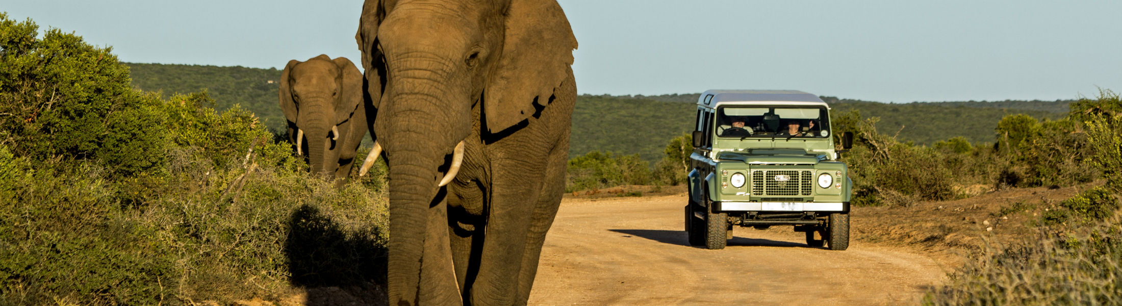 Safari truck with elephants in foreground