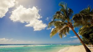 Beach and Palm Tree at Sugar Bay in Barbados