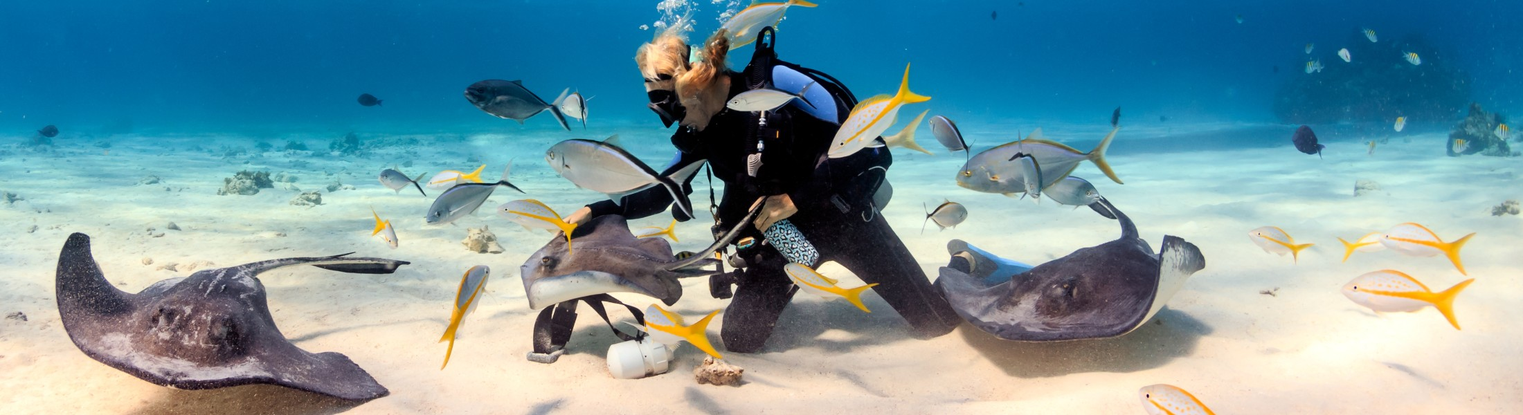 Man Scuba diving surrounded by stingrays in the Caribbean