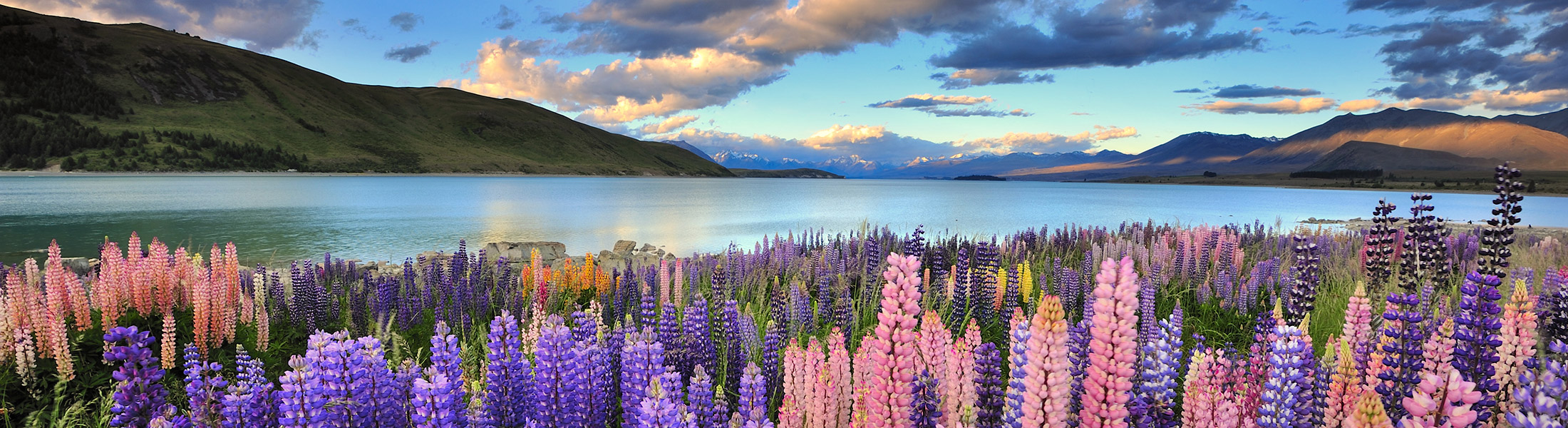 Wildflowers at Lake Taupo in New Zealand