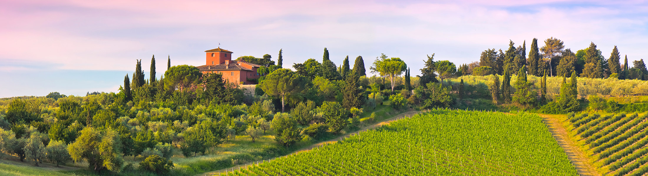 Vineyard and villa at sunset in Tuscany Italy in Europe