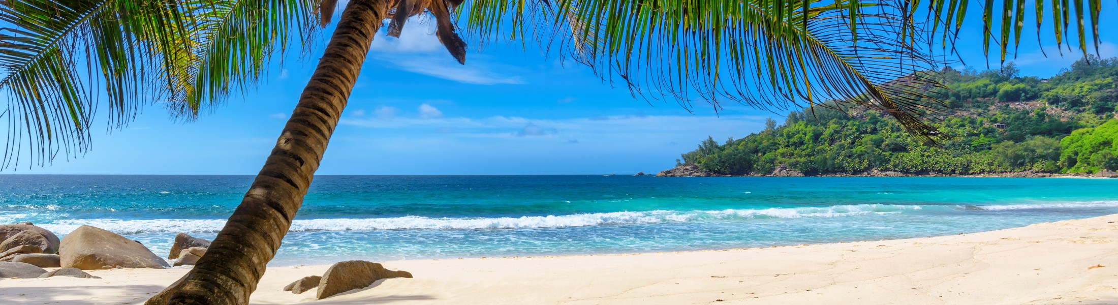 White sand beach and palm trees in Barbados