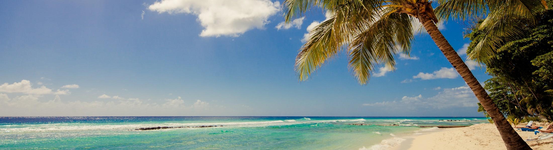 Beach and palm tree at Sugar Bay Barbados