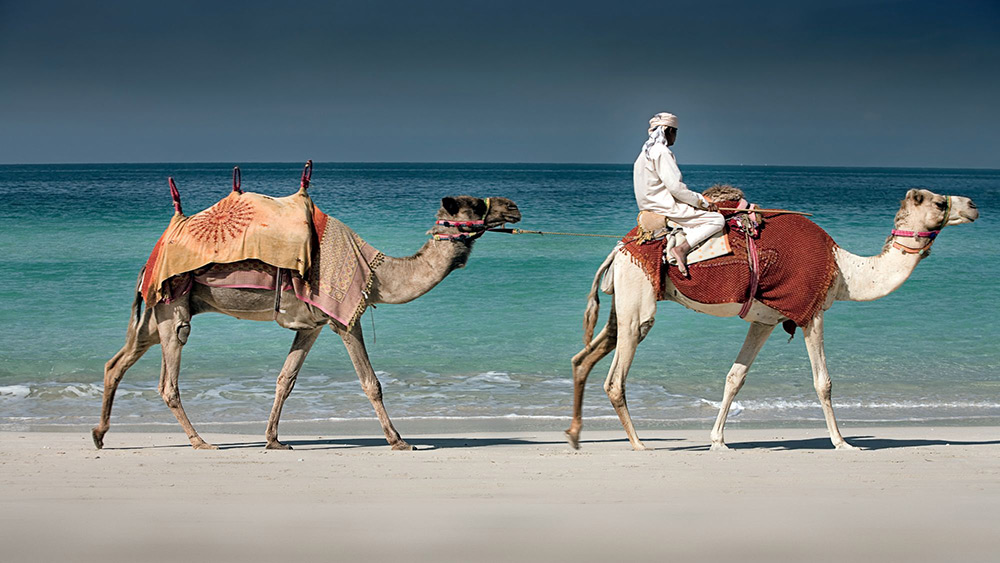 Camel rides on the beach at Ritz-Carlton Dubai