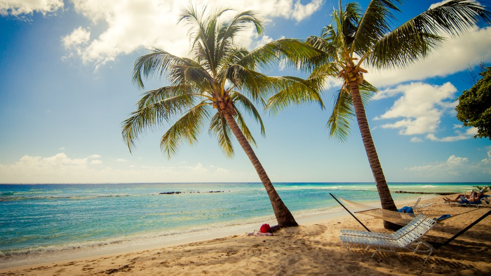Hammock under palms at Sugar Bay Barbados
