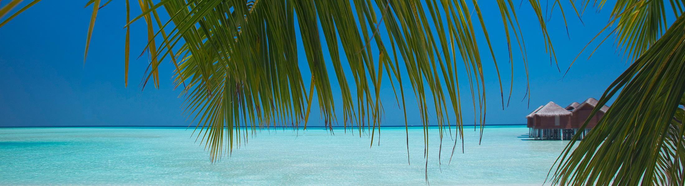 Over water villas seen through palms at Anantara Dhigu Resort