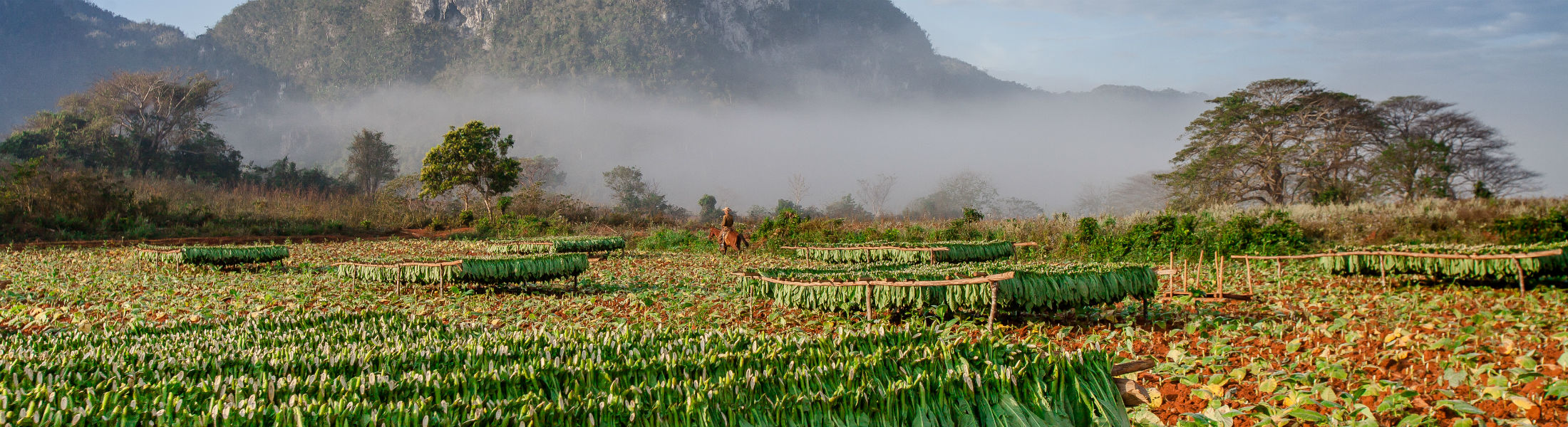 Vineales Cuba tobacco region
