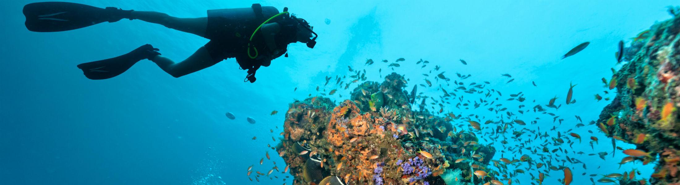 Explore the amazing coral reef