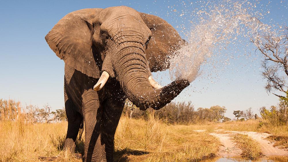 Elephant seen on a Safari & Beach holiday