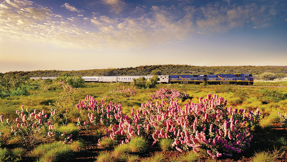 Indian Pacific train on an Australia multi-centre holiday