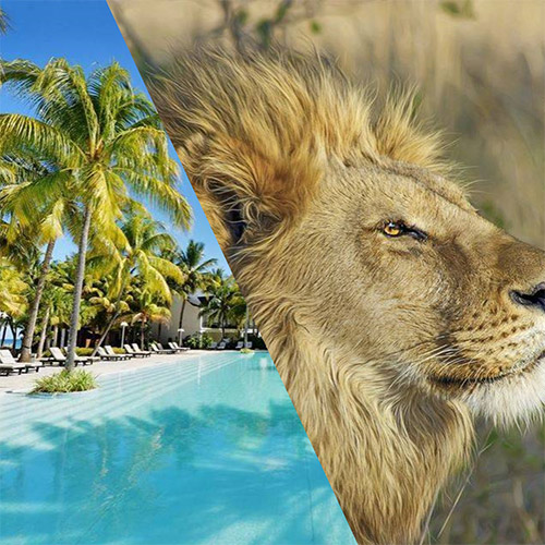 Pool and lion merged