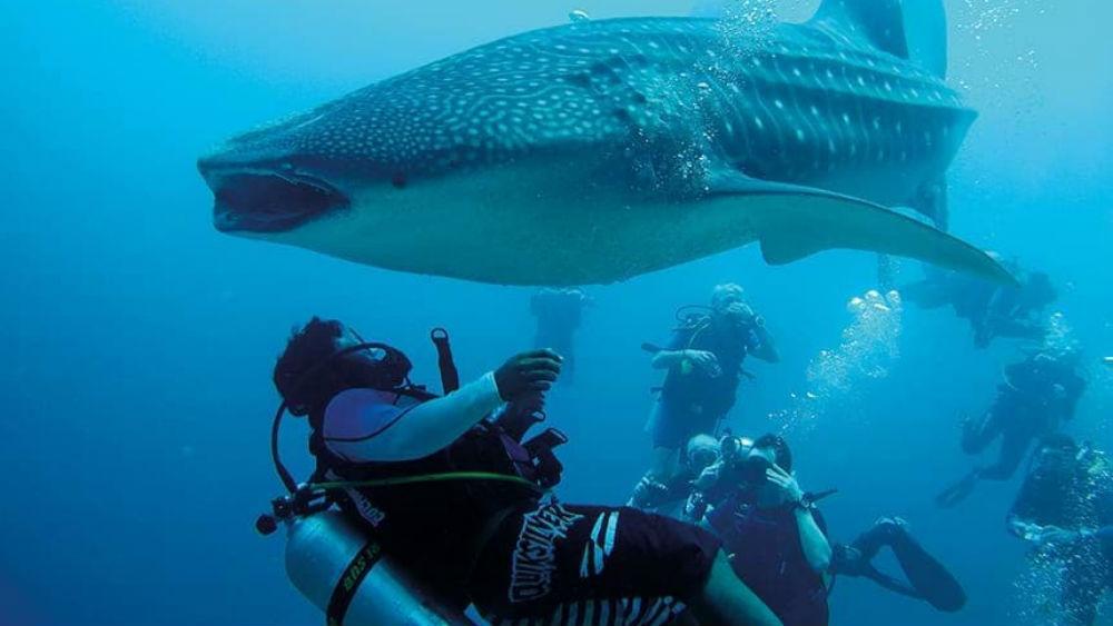 deep sea diving at the Constance Moofushi Maldives