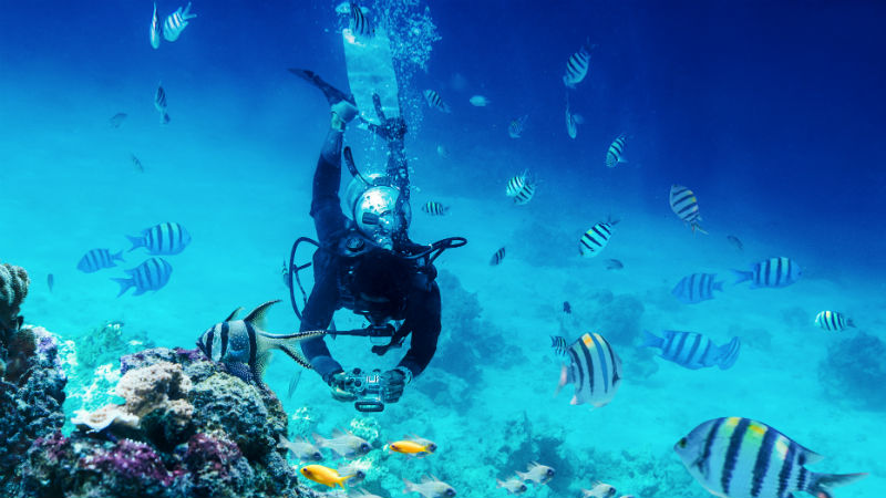 Diver swimming underwater near coral reefs and fish