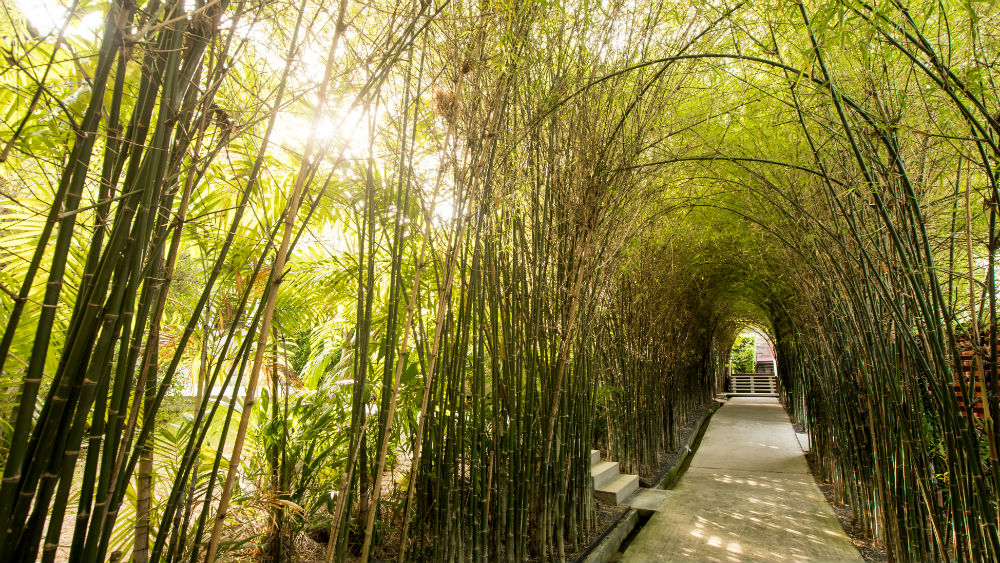 Walkway covered by bamboo at Outrigger Koh Samui Beach Resort