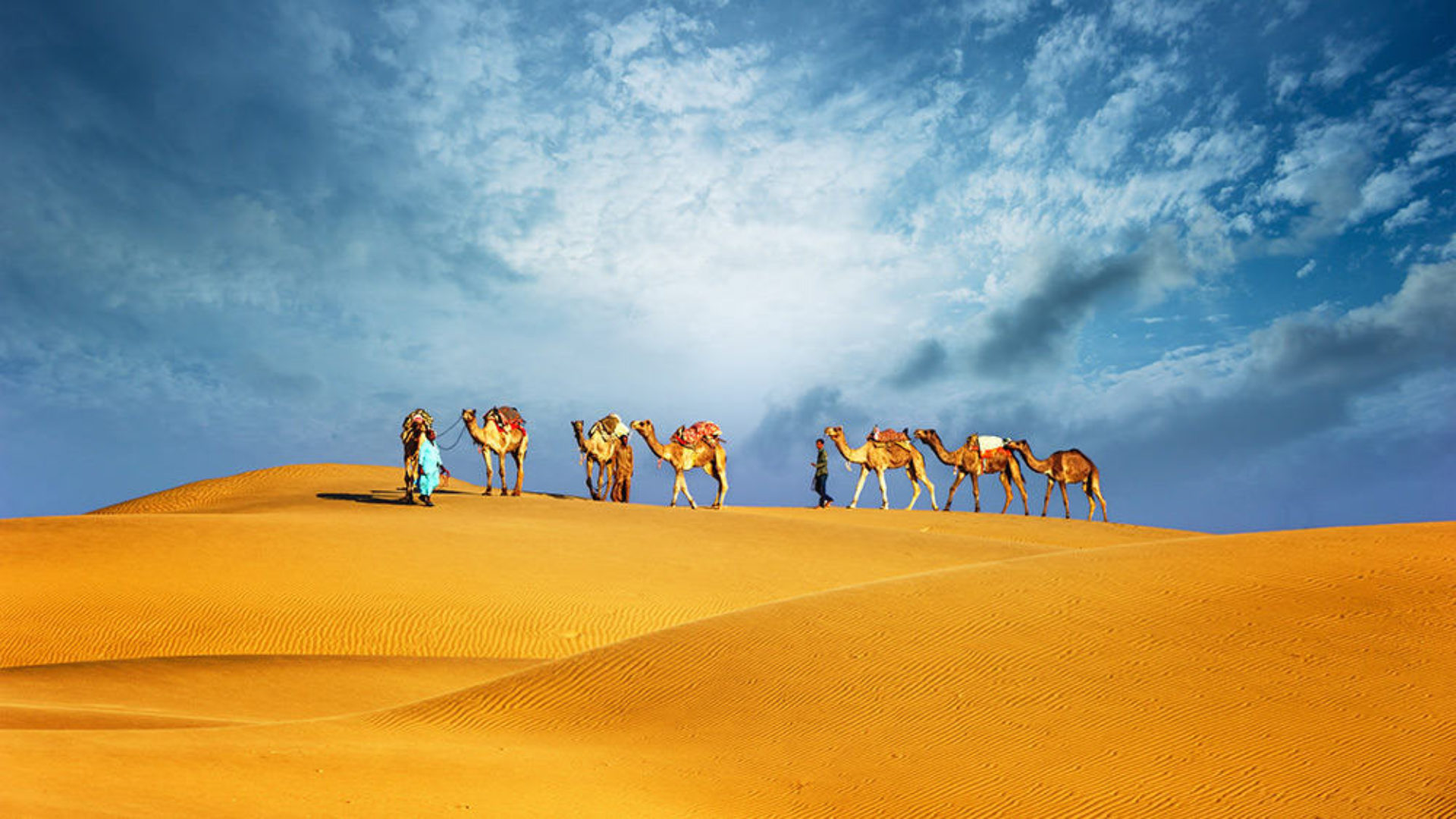 Camels in the desert on a Mauritius & Dubai twin-centre