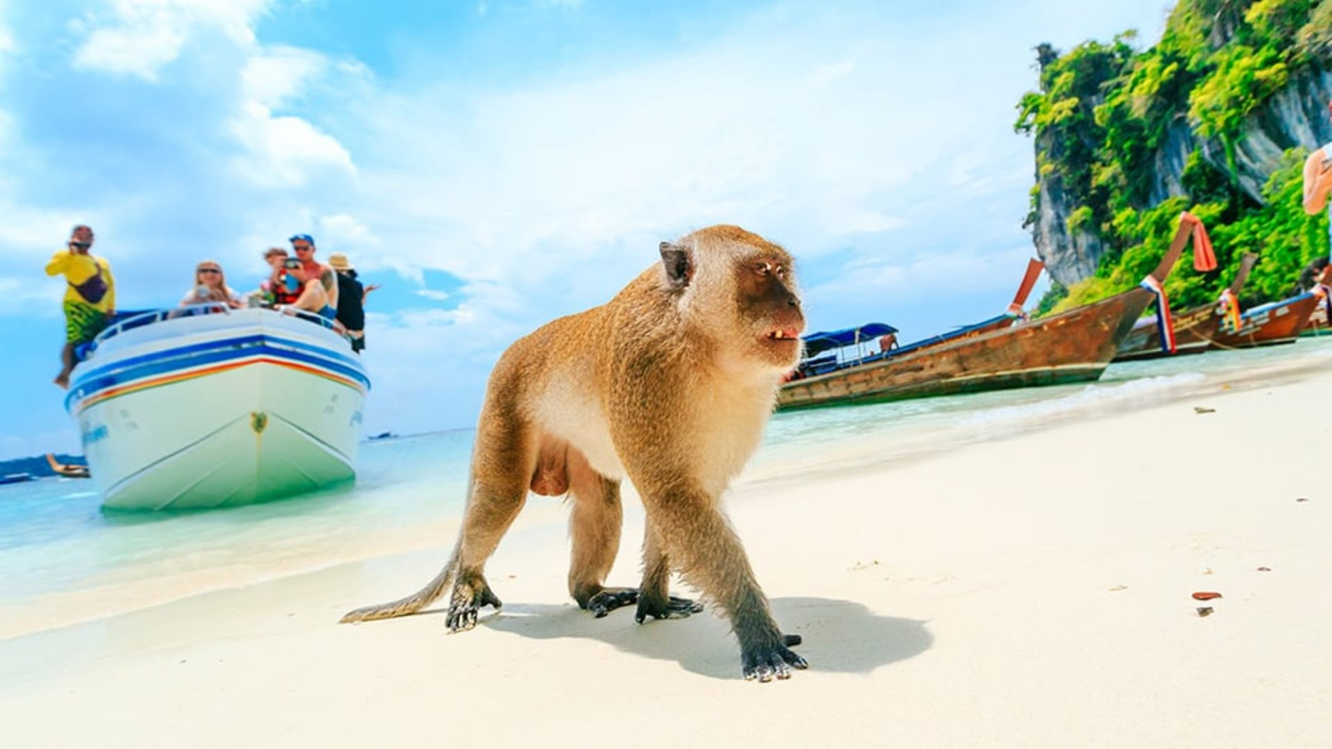 Monkey on the beach on a Thailand Multi-Centre